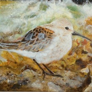 Dunlin , Original painting on Board